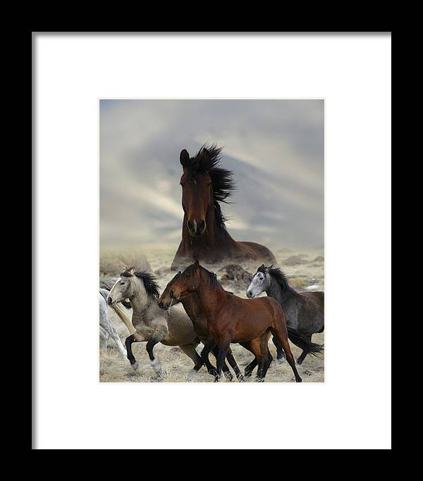Horse Framed Print featuring the photograph Band Of One by Gene Praag