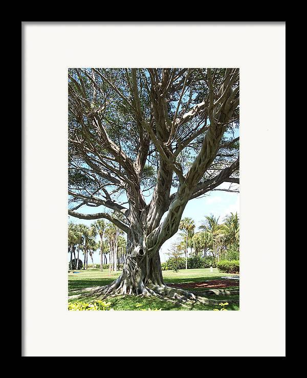 Florida Framed Print featuring the photograph Banyan Tree by Anna Villarreal Garbis
