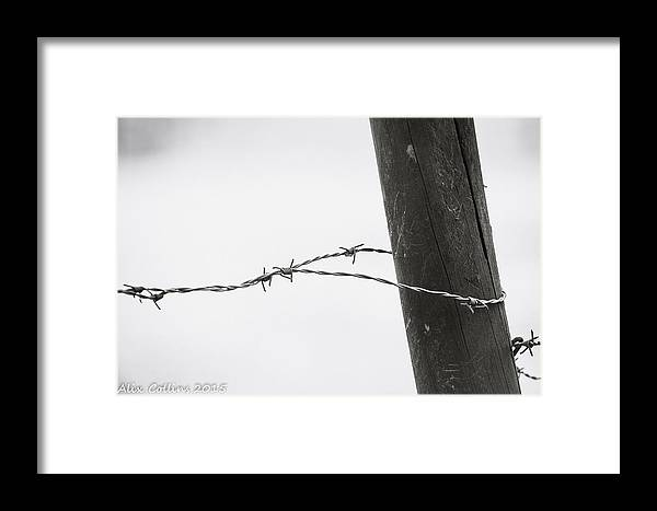 Wire Framed Print featuring the photograph Barbed Wire by Alicia Collins