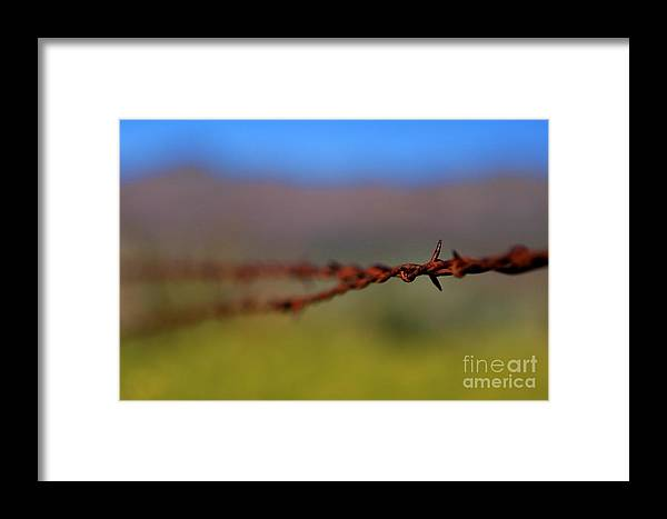 Closeup Framed Print featuring the photograph Barbed Wire Fencing 1 by Penny Haviland