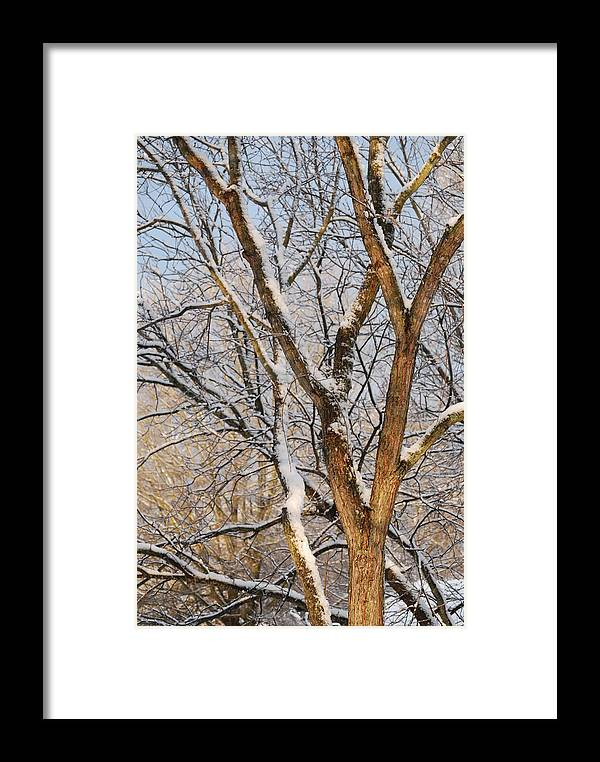 Trees. Branches Framed Print featuring the photograph Bare Branches by Trudi Southerland