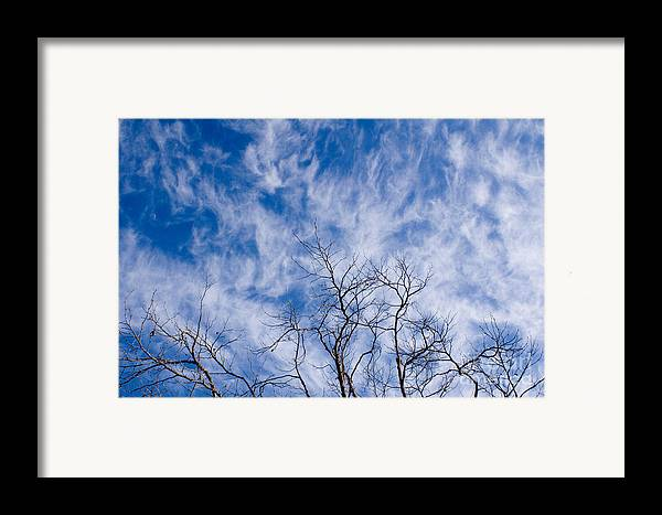 Nature Framed Print featuring the photograph Bare Winter Branches In California by Julia Hiebaum