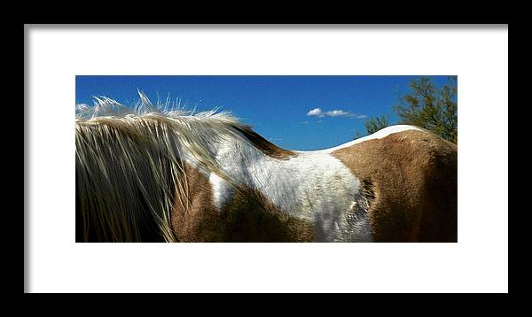 Horse Framed Print featuring the photograph Bareback by Joanne Riske
