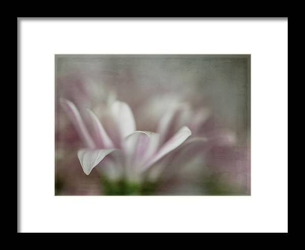 Flower Framed Print featuring the photograph Barely There by Teresa Wilson