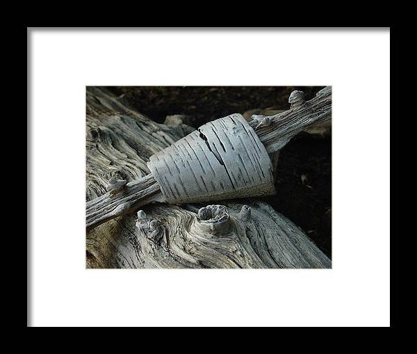 Nature Framed Print featuring the photograph Bark Curl by Eric Workman