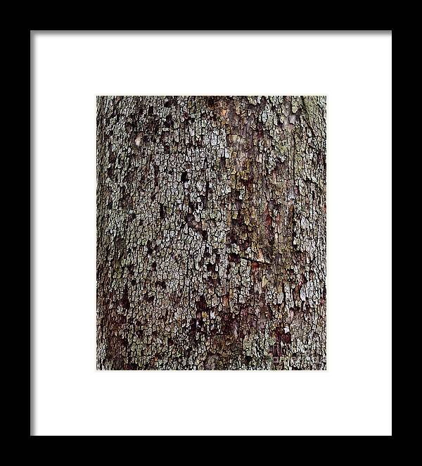 Natural Framed Print featuring the photograph Bark by Karen Adams