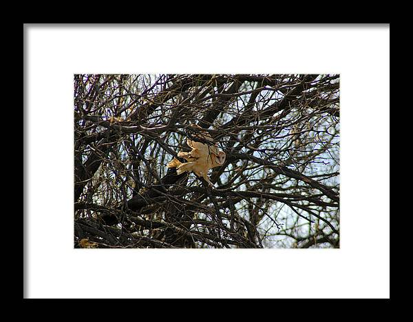 Large Framed Print featuring the photograph Barn Owl In A Tree by Teresa Stallings