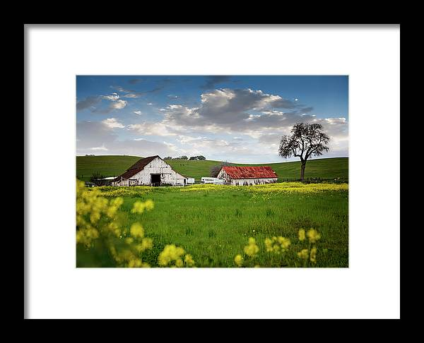 Barn Flowers Yellow Green White Blue Sky House Spring Landscape Framed Print featuring the pyrography Barn Paso Robles, Ca by Heather Fiedler