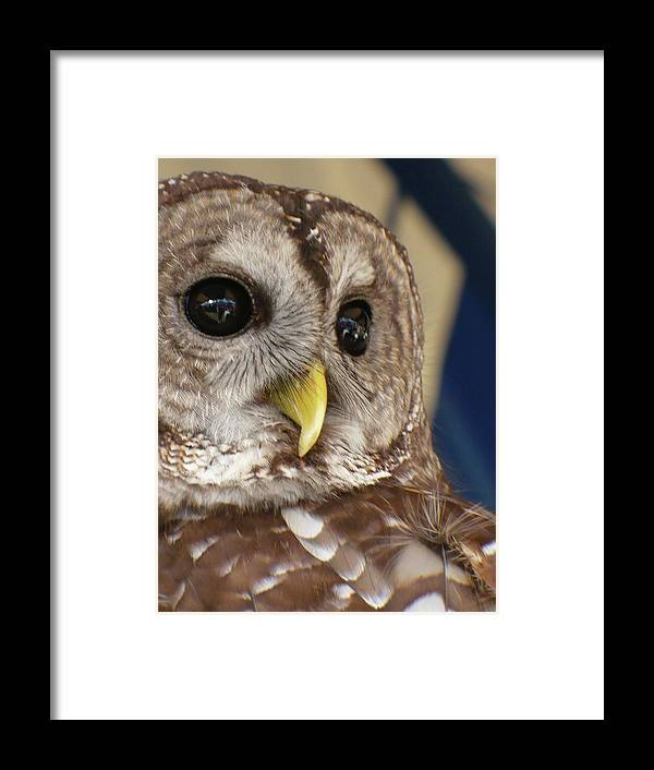 Nature Framed Print featuring the photograph Barney The Owl by Florene Welebny