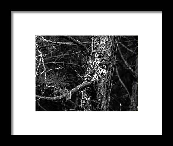 Wildlife Framed Print featuring the photograph Barred In Black And White by Alicia Collins