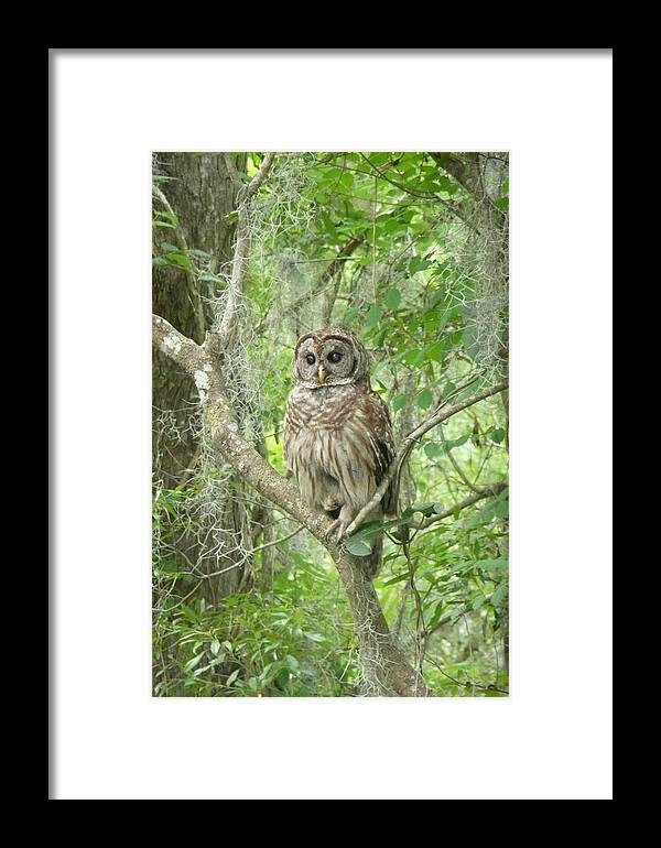 Nature Framed Print featuring the photograph Barred Owl I by Kathy Schumann