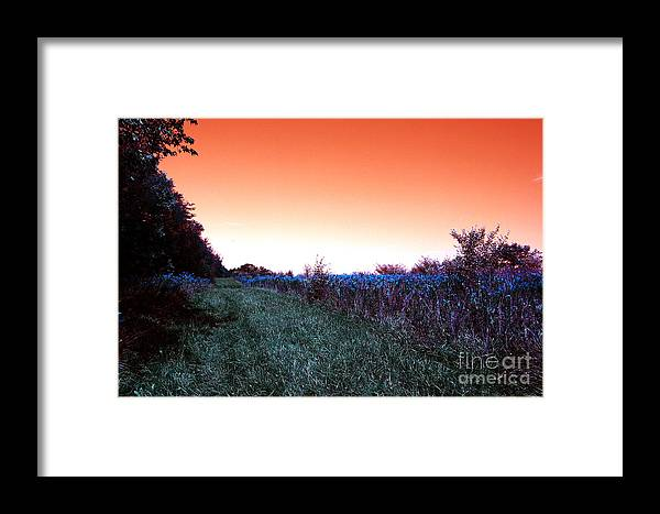 Air Framed Print featuring the photograph Barred Owl Trail by Alan Look
