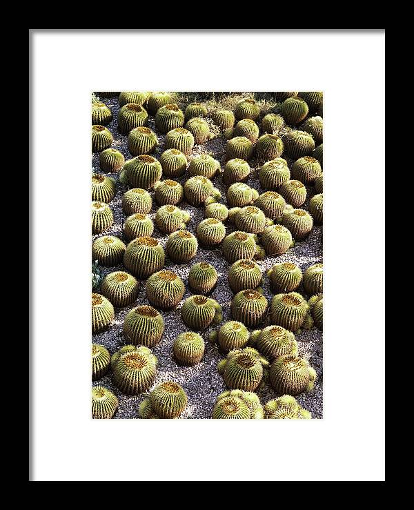 Cactus Framed Print featuring the photograph Barrel Garden by Ernie Echols