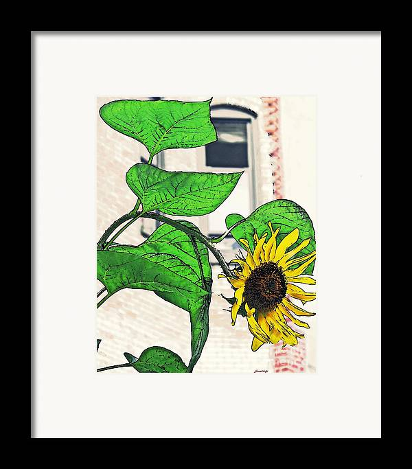 Sunflower Framed Print featuring the photograph Barrio Sunflower by Sarah Loft