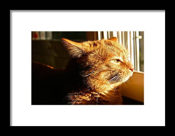 Bart Framed Print featuring the photograph Bart The Cat by Robert Joseph