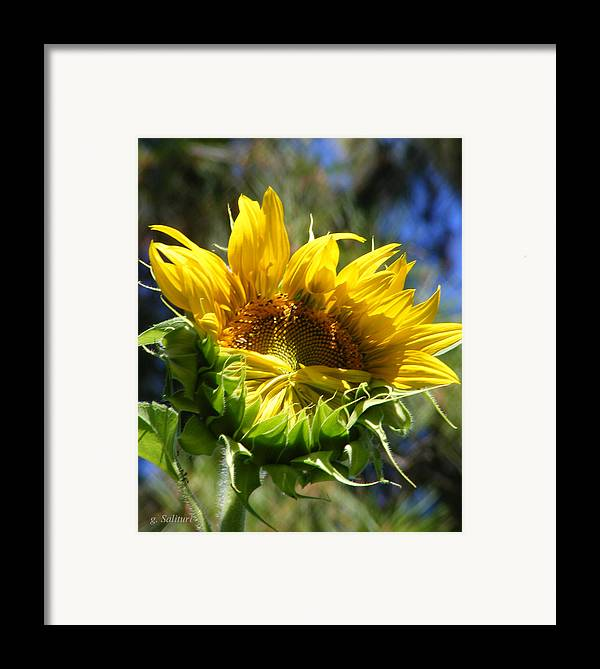 Sunflower Framed Print featuring the photograph Bashfull by Gail Salitui