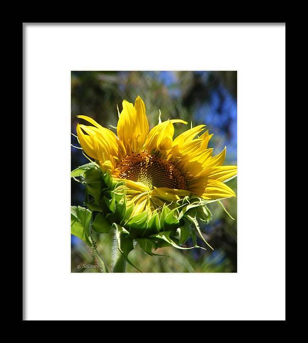 Sunflower Framed Print featuring the photograph Bashfull by Gail Salitui