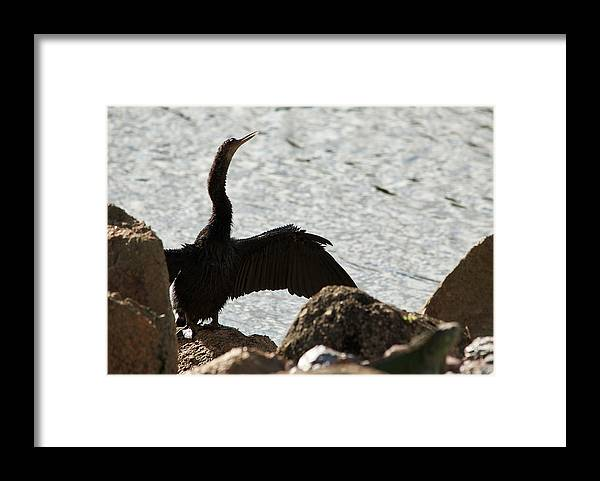 Bask Framed Print featuring the photograph Bask In The Sun by Iryna Oliinyk