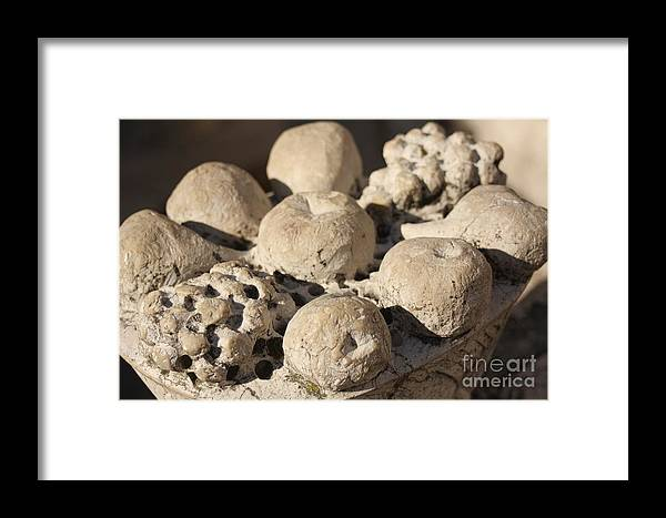 Venice Framed Print featuring the photograph Basket Of Marble Fruit In Venice by Michael Henderson