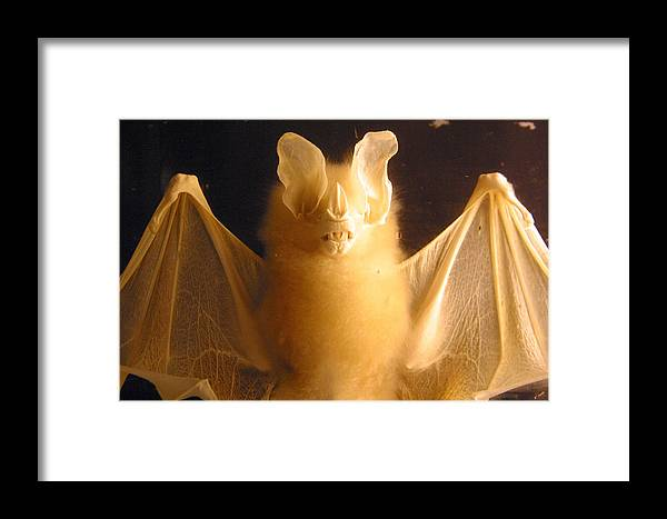 Jez C Self Framed Print featuring the photograph Bat Out Of Gel by Jez C Self