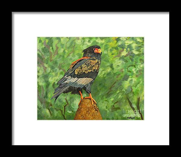 Eagle Framed Print featuring the painting Bataleur Eagle by Caroline Street