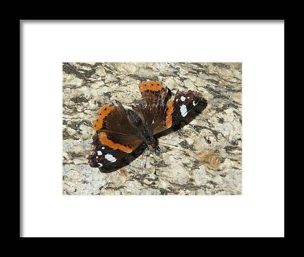 Butterfly Framed Print featuring the photograph Battered Butterfly by Valerie Ornstein