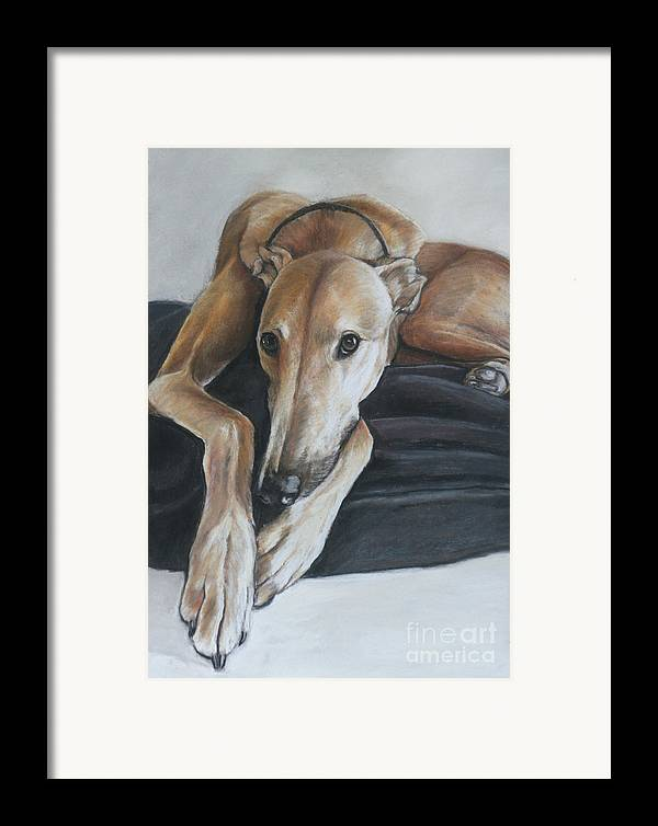 Dog Framed Print featuring the painting Bauregard by Charlotte Yealey