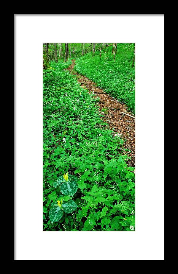 Wildflower Trail Framed Print featuring the photograph Baxter Creek Trail by Alan Lenk