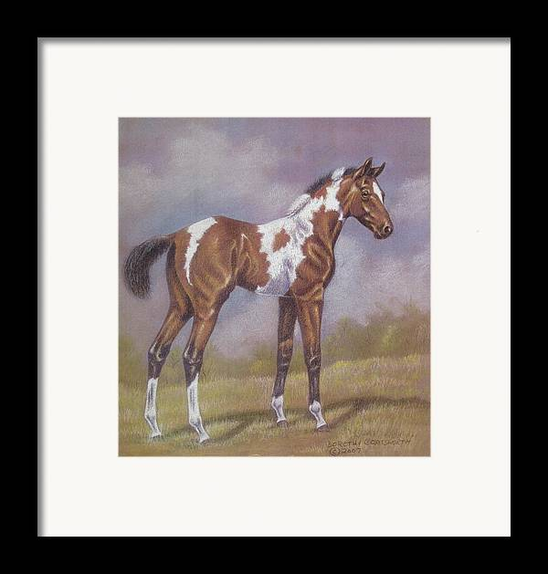 Foa; Paint Horse Framed Print featuring the pastel Bay Paint Foal by Dorothy Coatsworth