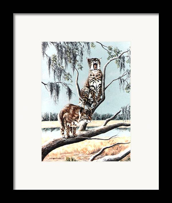 Bobcats Framed Print featuring the painting Bayou Bobcats by DiDi Higginbotham