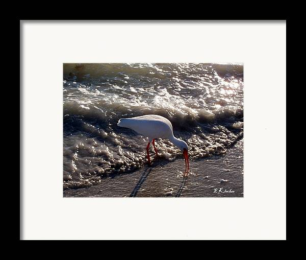 Beach Framed Print featuring the photograph Beach Bird by Elizabeth Klecker
