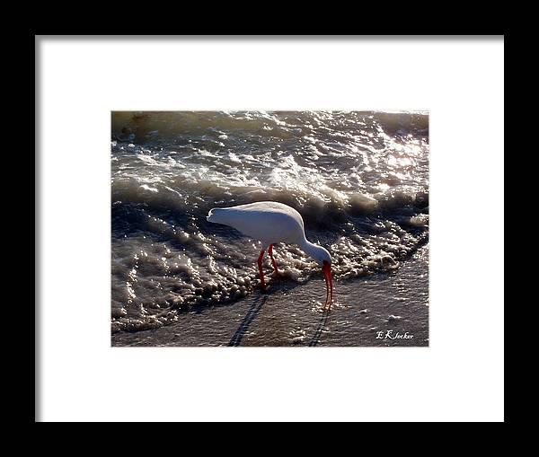 Beach Framed Print featuring the photograph Beach Bird by Elizabeth Klecker