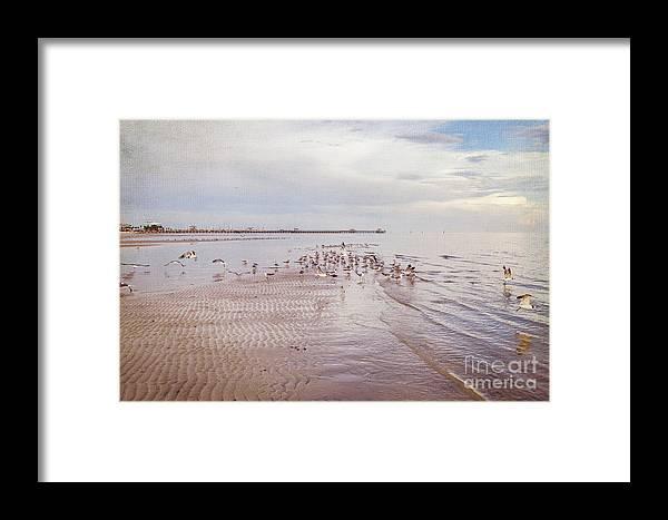 Gulf Coast Framed Print featuring the photograph Beach Birds by Joan McCool