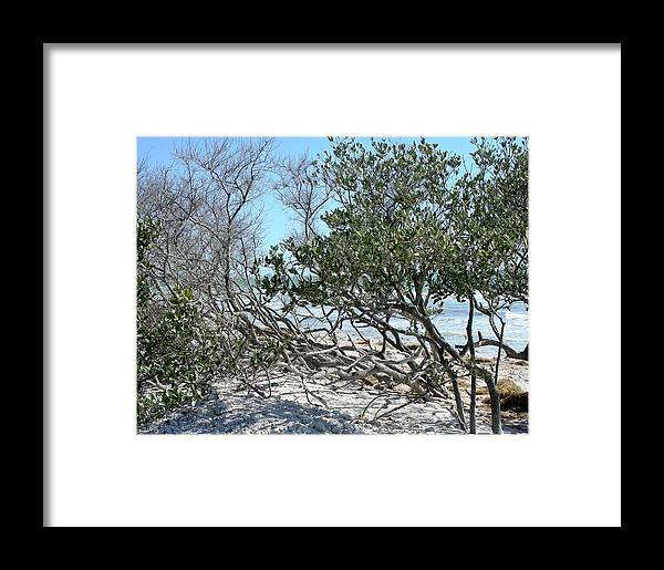 Landscape Framed Print featuring the photograph Beach Brush by Peter McIntosh
