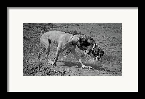 Boxer Framed Print featuring the digital art Beach Buddies by DigiArt Diaries by Vicky B Fuller