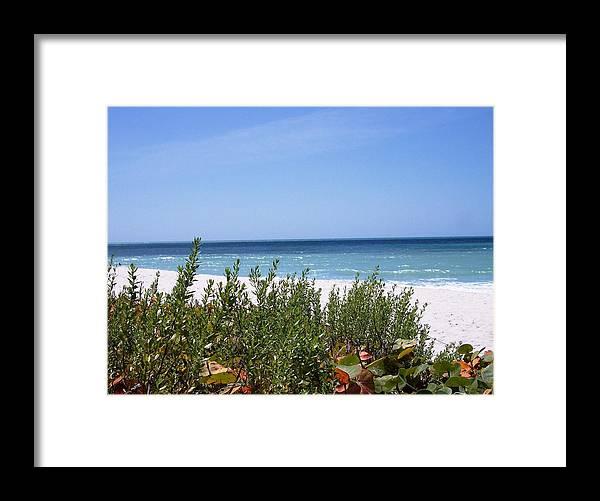 Beach Ocean Foliage Plants Nature Florida Framed Print featuring the photograph Beach Scene 6 by Anna Villarreal Garbis