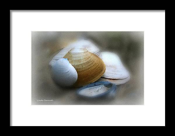 Nature Framed Print featuring the photograph Beach Shells by Linda Sannuti