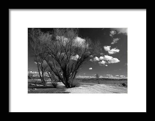Folsom Framed Print featuring the photograph Beach Tree by Dave Perks