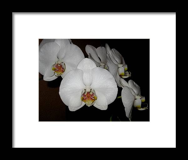 Orchid Framed Print featuring the photograph Beacon by Betnoy Smith