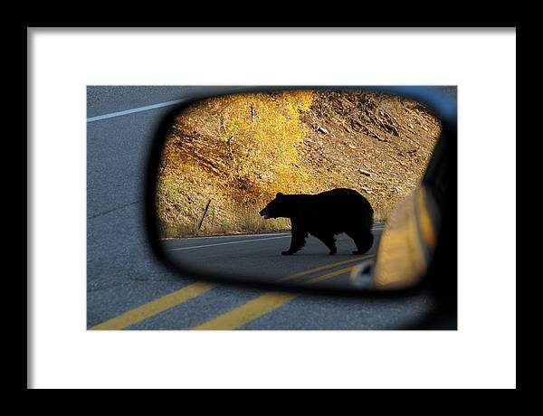 Bear Framed Print featuring the photograph Bear Chance by Al Swasey