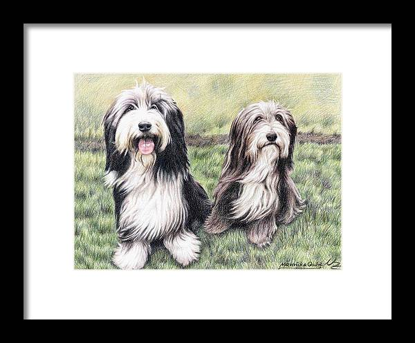 Dogs Framed Print featuring the drawing Bearded Collies by Nicole Zeug