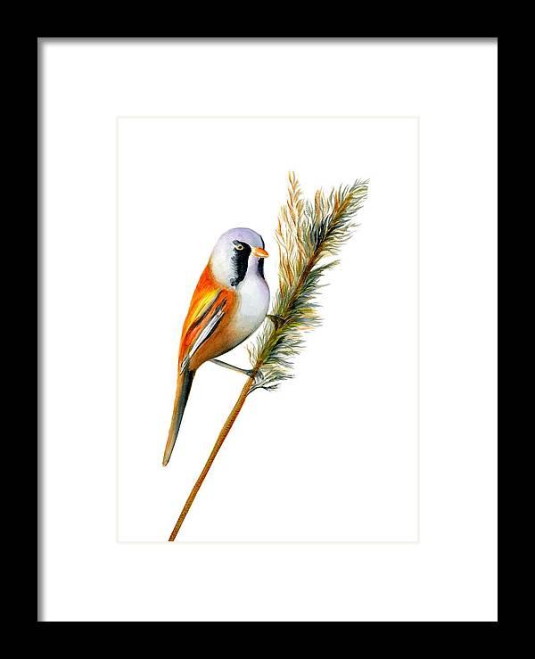 Bearded Tit Bird Framed Print by Alison Langridge
