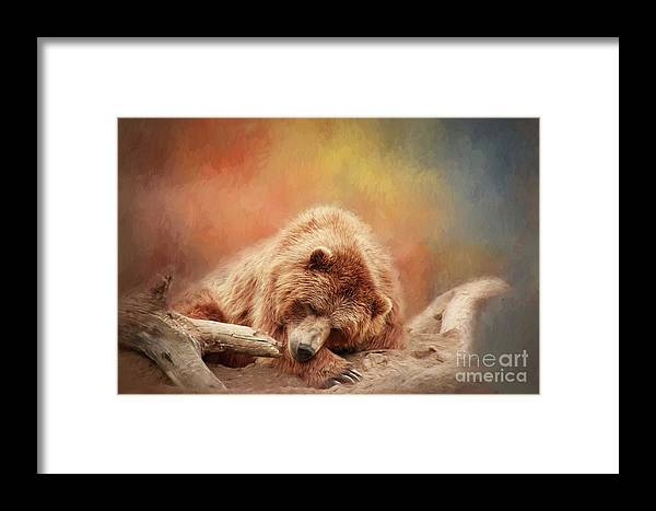 Bear Framed Print featuring the photograph Bearly Asleep by Sharon McConnell
