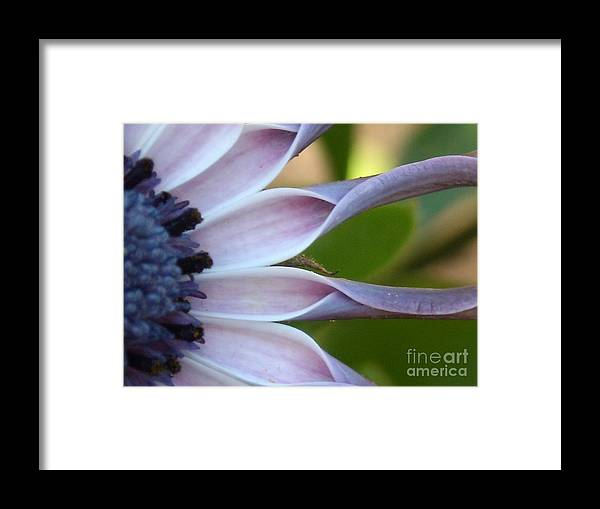 Floral Framed Print featuring the photograph Beautiful 002 by Line Gagne