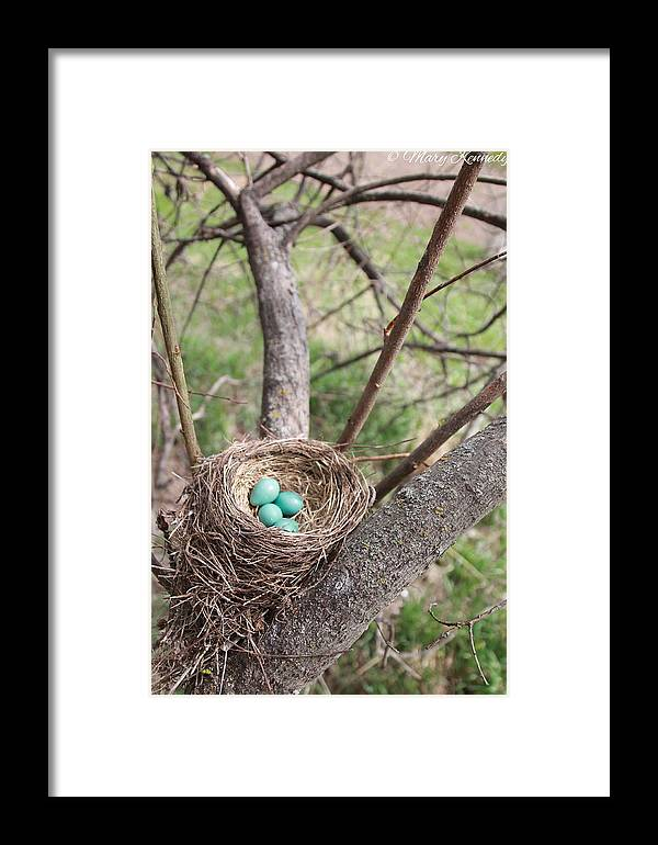Trees Framed Print featuring the photograph Beautiful Baby's by Mary Kennedy