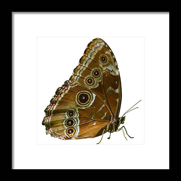 Butterflies Framed Print featuring the photograph Beautiful Butterfly Wings Of Meadow Brown Isolated by Taiche Acrylic Art