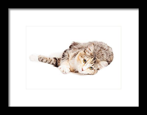 Adorable Framed Print featuring the photograph Beautiful Calico Kitty Laying Looking Forward by Susan Schmitz