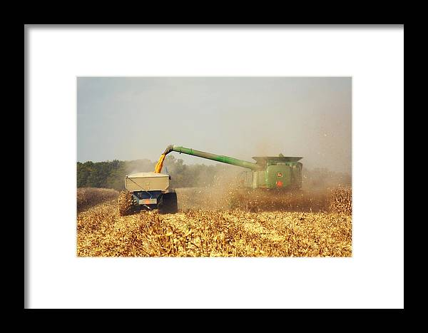Corn Harvest Framed Print featuring the photograph Beautiful Corn Harvest by Goldie Pierce