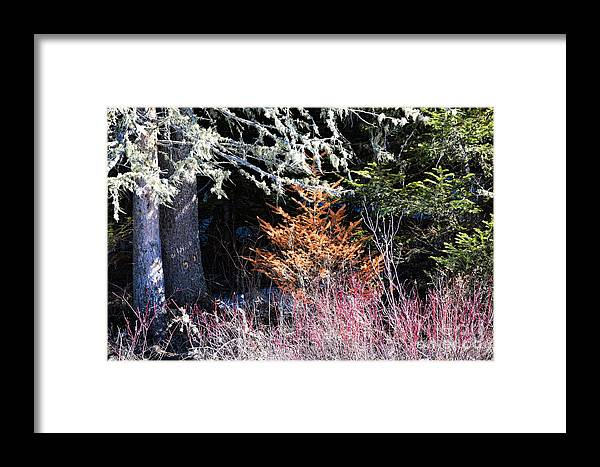 Trees Framed Print featuring the photograph Beautiful Dead by William Tasker
