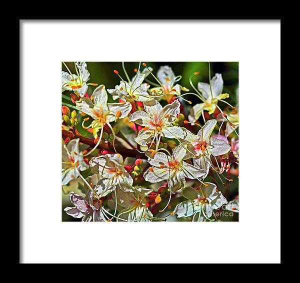 Beautiful Flower Framed Print featuring the photograph Beautiful Flowers by Edita De Lima